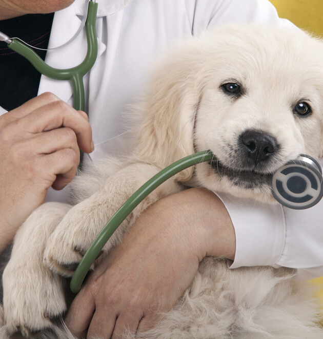 animal-health-01