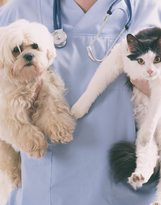 animal-health-02